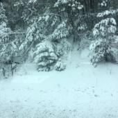 Sneg ob poti